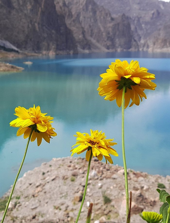Colorful Flowers around Attabad Lake