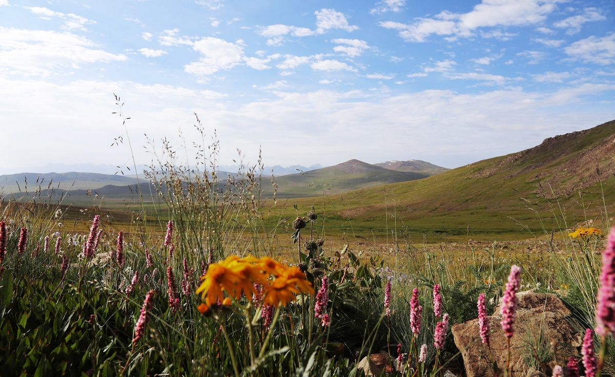 Colors in Deosai Plains