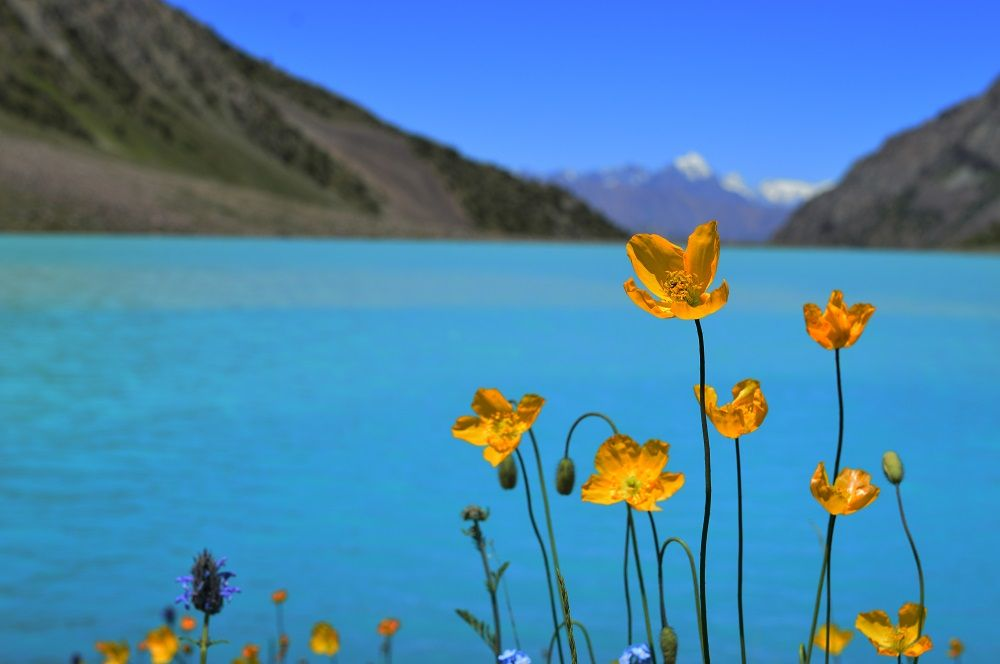 Shukargah Lake within colorful flowers
