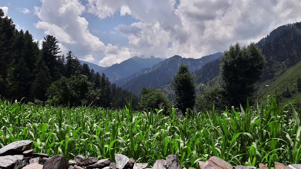 Cron Fields in Sharda Valley