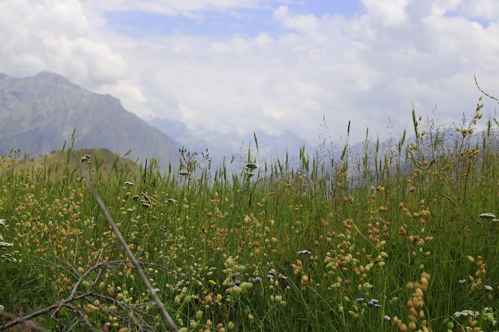 Fields in Rama Valley