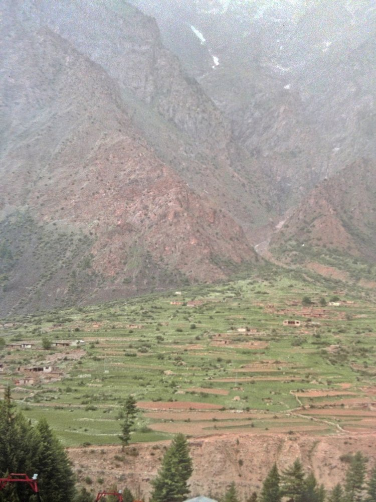 Fields in Naltar