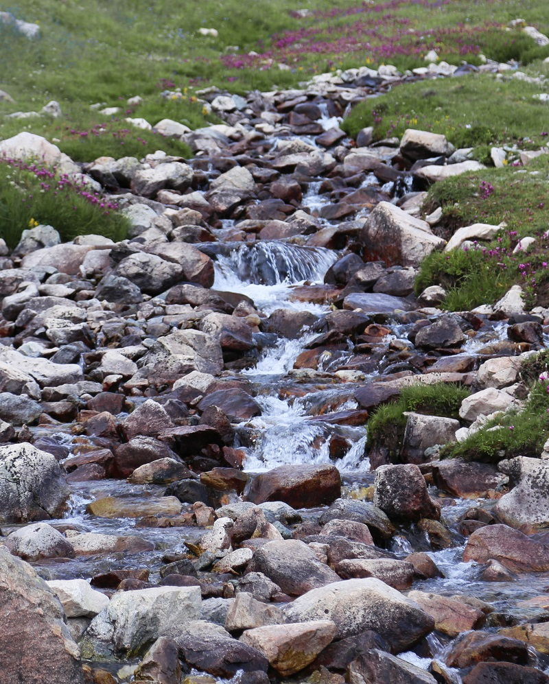 Streams in Deosai Plains