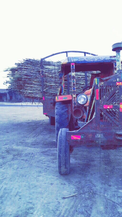 Transporting Sugarcane