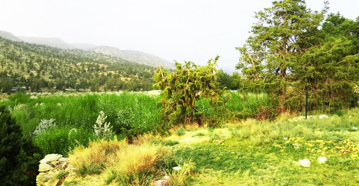 Summer in Ziarat
