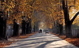 Chanar Road in Abbotabad
