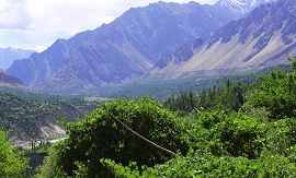 Grapevine Orchards in Hunza