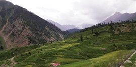 Rama Meadows Forest