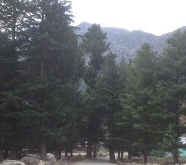 Saif ul Muluk Trek throuhg Trees