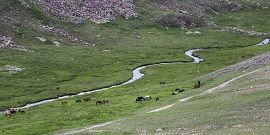 Grazing in Deosai Plains