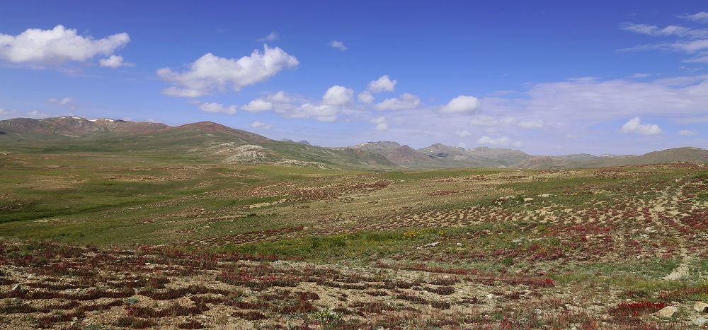 Endless Deosai Plains