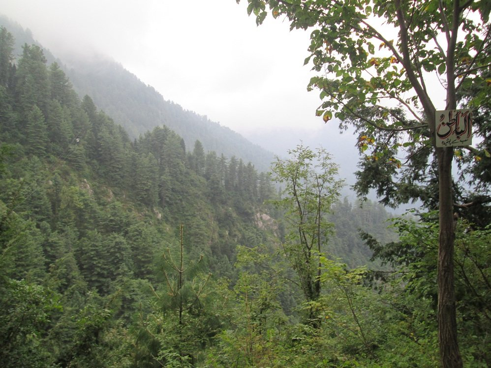 View from Donga Gali Ayubia Trek